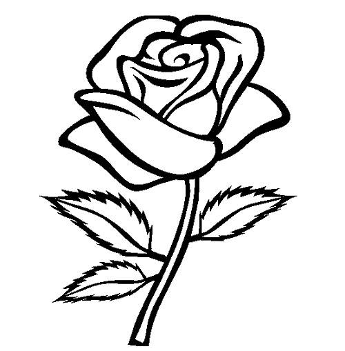 Rose Flower: Rose Flower Sketch